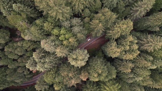 Looking down to cars driving on the road in the forest of Sequoias in Northern California, USA West Coast
