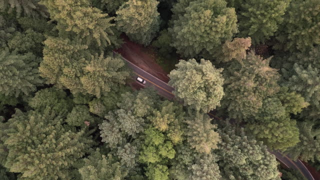 Looking down to cars driving on the road in the forest of Sequoias in Northern California, USA West Coast - vídeo