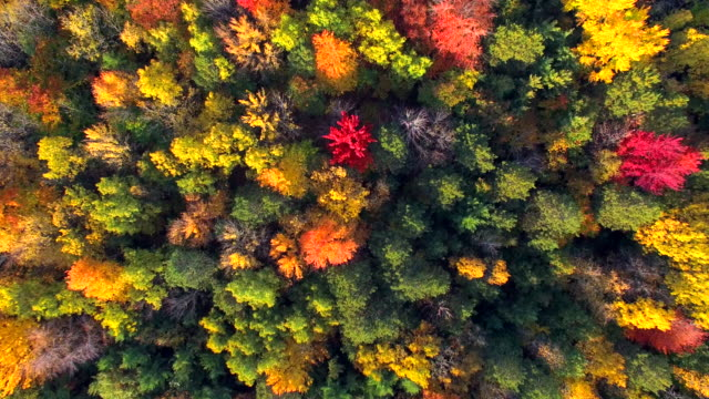 Looking Straight Down on Autumn's Colorful Trees, Scenic Forests video