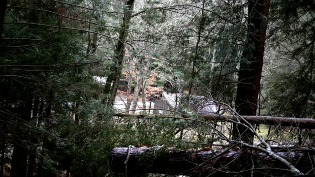 looking through the trees at a cabin on the ground in a forest - joseph kelly stock videos and b-roll footage