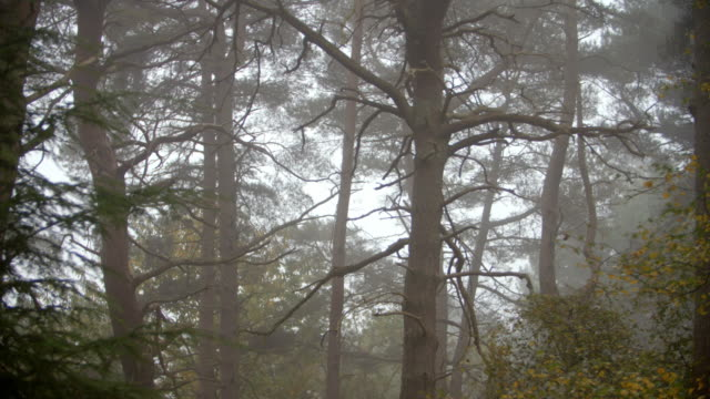 Looking Through Trees In Autumn Woodland On A Misty Morning video