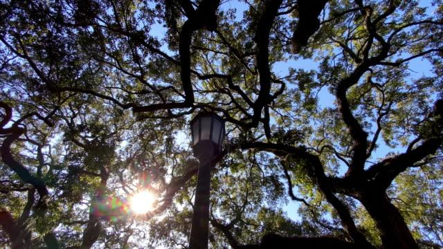 blick auf die live oak bäume in savannah georgia - savanne stock-videos und b-roll-filmmaterial