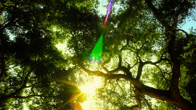 Looking up Enchanted Forest Lens flare video