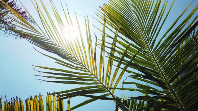 looking up into a palm - albero tropicale video stock e b–roll
