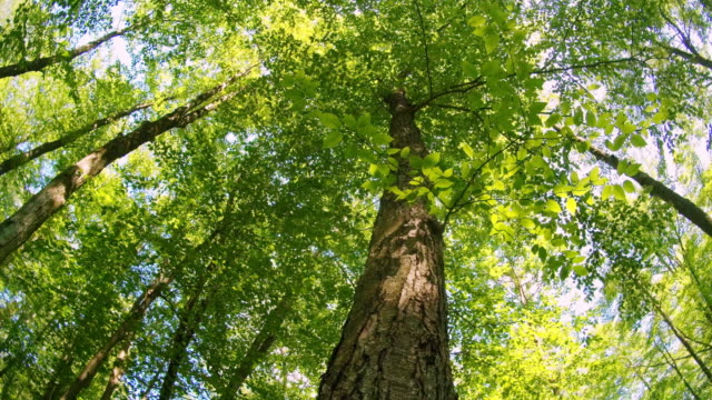 alzando lo disto! la giornata estiva nei boschi in appalachian, regione di poconos, pennsylvania, usa. il baldacchino degli alberi. - hickory run video stock e b–roll