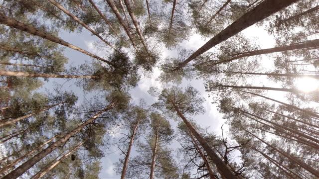 vidéos et rushes de la recherche par le biais de arbres - vue en contre plongée verticale