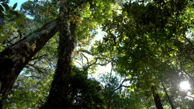 局所フォレストの高い古い大きな木を見上げる - ローアングル点の映像素材/bロール