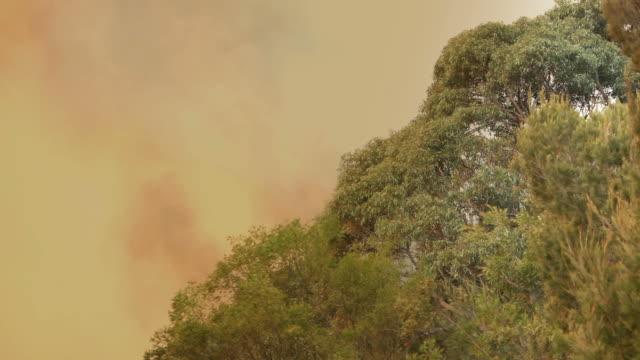 루킹 최대 스카이 있는 호주 부시 화재 - 시드니 뉴사우스웨일스 스톡 비디오 및 b-롤 화면