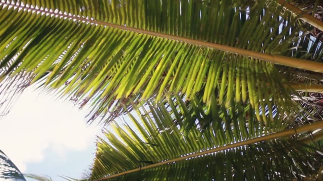 Looking up to the sky and leaves of the palm tree. 1920x1080 video