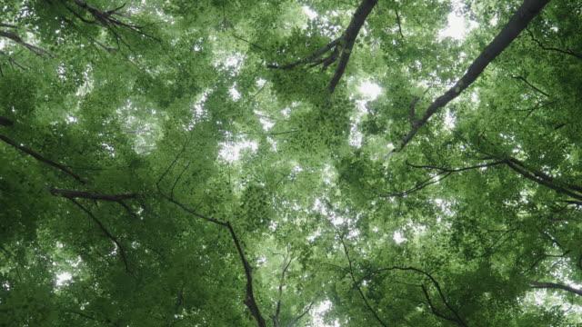 pov。木々の冠を通って空を見上げる。森の中でのブログ、森林地帯での登山やハイキング、古い森の中でのyoutube vloggerの個人的な視点。 - ローアングル点の映像素材/bロール