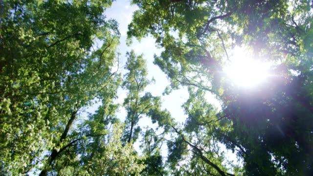 Blick in den Himmel während der Fahrt mit Bäumen vorbei und Sun Shining POV View – Video