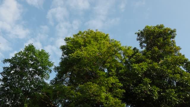 青空と雲で木を見上げる - ローアングル点の映像素材/bロール
