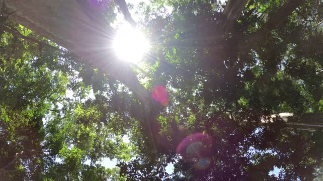 Looking up tree with sunlight