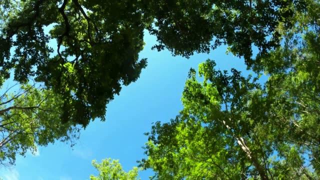güneş ışığı ile ağaçlara bakmak - kubbe stok videoları ve detay görüntü çekimi