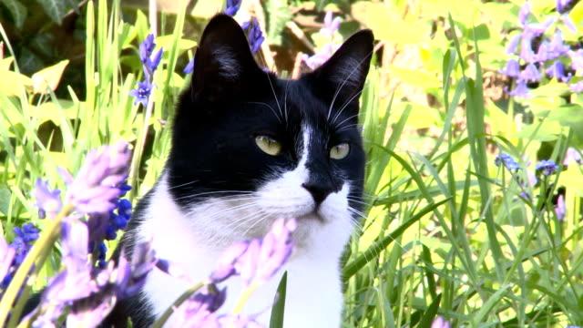 смотровая патруль - кошка смешанной породы стоковые видео и кадры b-roll