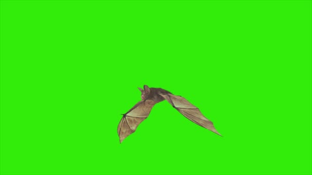 Loop animation fly bat with green screen Loop animation fly bat with green screen HD vampire stock videos & royalty-free footage