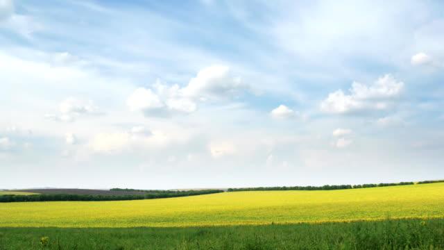 loop of fields and sky video
