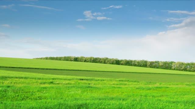loop of green field