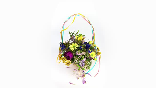 Loop time lapse of bouquet of flowers in basket that is blooming and fading on the white background