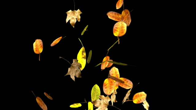 Loopable autumn leaves falling+Alpha included. video