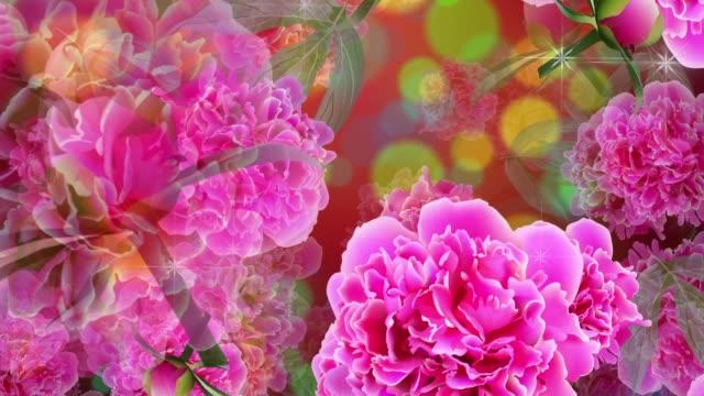 loopable bakgrund med rosa blommor av paeonia och gröna blad och glitter. - blommönster bildbanksvideor och videomaterial från bakom kulisserna