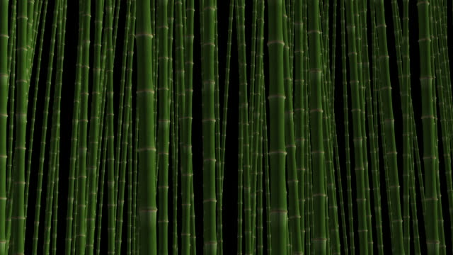 Loopable Bamboo Forest in Wind