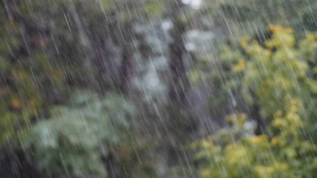 loopable close up shot of rain in the forest, rainforest, pov, selective focus, greenery, beauty in nature, springtime, autumn - deszcz filmów i materiałów b-roll