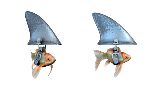 vídeos de stock e filmes b-roll de loopable, peixe dourado pretexto de um tubarão - surrealismo