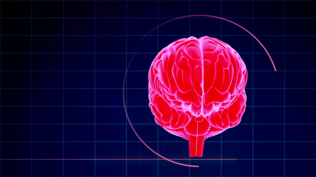Loopable Human Brain Abstract