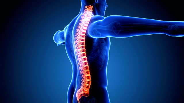 Loopable Human Spine Scan