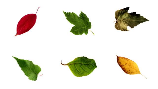 vídeos y material grabado en eventos de stock de hojas en bucle mate (6in1) - fall leaves