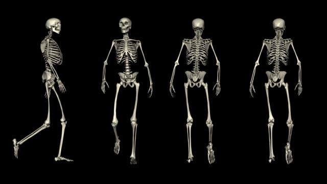 loopable, postures, four views of walking skeleton - i̇nsan i̇skeleti stok videoları ve detay görüntü çekimi