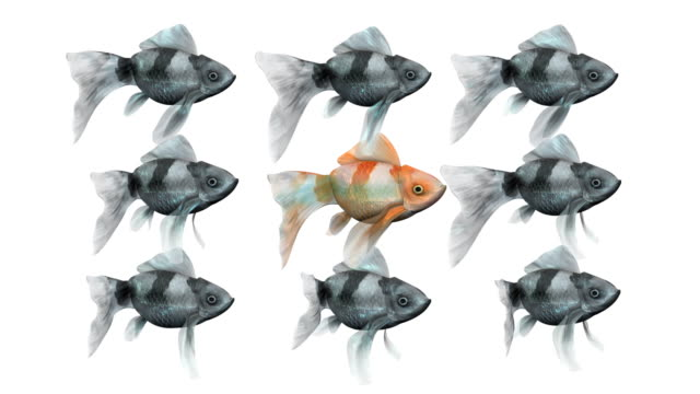 Loopable, Red Goldfish Leading from the Center Red Goldfish Leading from the Center (Loopable) individuality stock videos & royalty-free footage