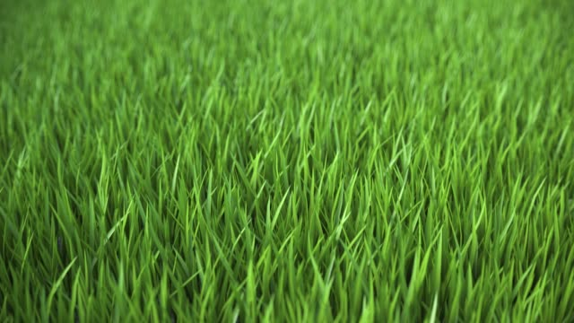 Looped animation of flying over a green lawn in 4k ultra HD