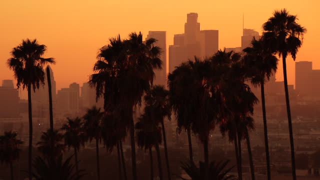 los angeles palm sunset - dusk stock videos & royalty-free footage