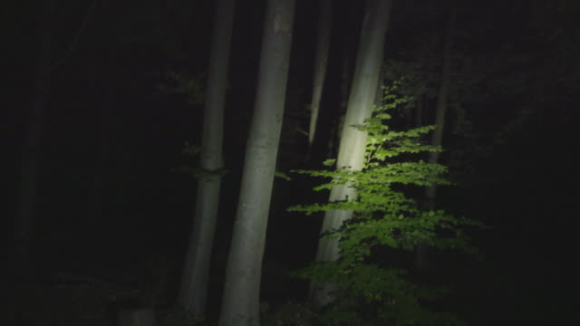 Lost in the Forest at Night POV-shot of somebody with a flashlight who has got lost in the forest, trying in vain to orient himself flashlight stock videos & royalty-free footage
