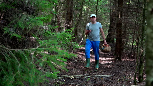 Lost mushroom picker using smart phone gps signal to get out from forest video