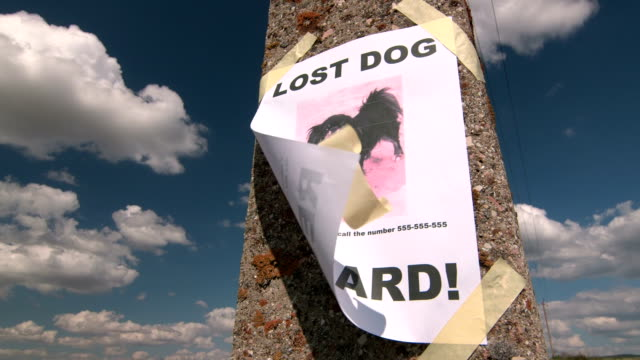Lost pet sign with dog image on pole