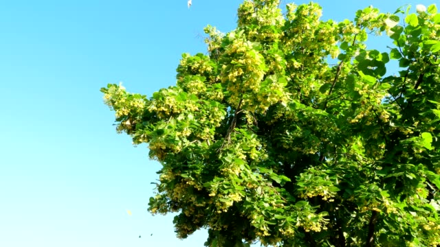 lot of butterflies near tree in the forest. - farfalla ramo video stock e b–roll