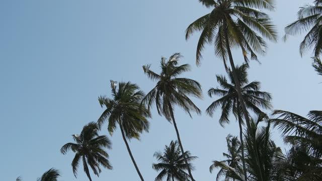 vidéos et rushes de beaucoup de palmiers contre le ciel bleu au tropical resort près de beach, zanzibar - arbre tropical