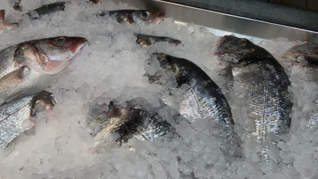 A lot of raw frozen fish sprinkled with crushed ice on counter at fish market.