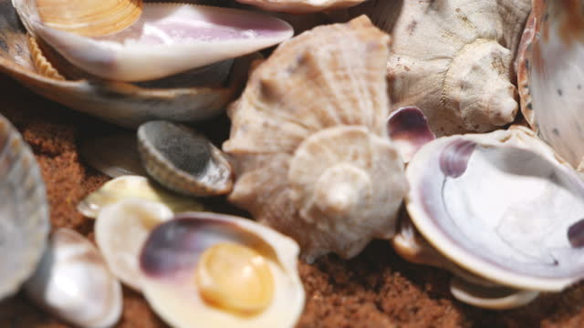vidéos et rushes de beaucoup de coquilles de mollusques marins tournent en douceur. différents types et types. production de perles - coquille et coquillage