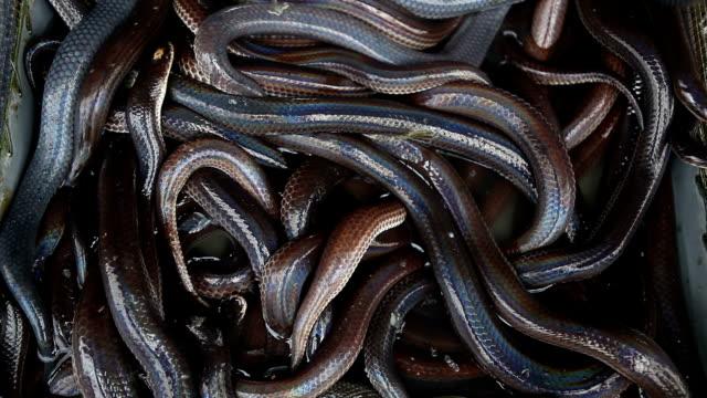 vídeos y material grabado en eventos de stock de muchas serpientes en una caja - serpiente