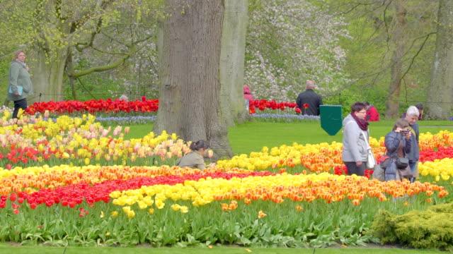 たくさんの春の庭の花の種類 - キューケンホフ公園点の映像素材/bロール