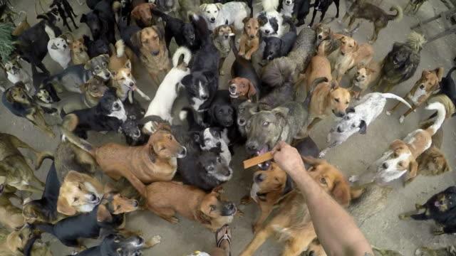 viele hunde essen zusammen in frieden - käfig stock-videos und b-roll-filmmaterial