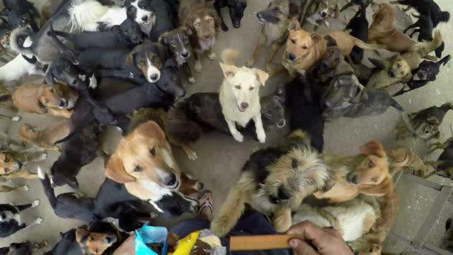 Lots of dogs eating together in peace video