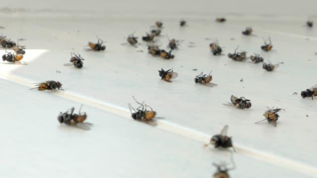 çok sayıda pencere pervazı, böcekler, veba ölmek, ölü sinekler sinek - sinek stok videoları ve detay görüntü çekimi