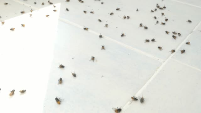 Lots Of Flies On The Windowsill Dead Flies Dying Insects