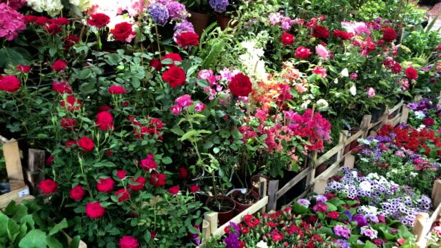花、フラワー マーケット、ショップ、市場、4 k フラワー ショップ、サボテン、suculent、多肉植物、カラフルな花がたくさん - 花市場点の映像素材/bロール