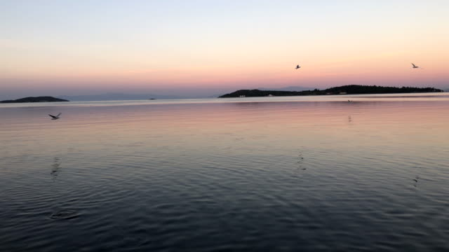 lots of seagulls flying in blue sky - время дня стоковые видео и кадры b-roll